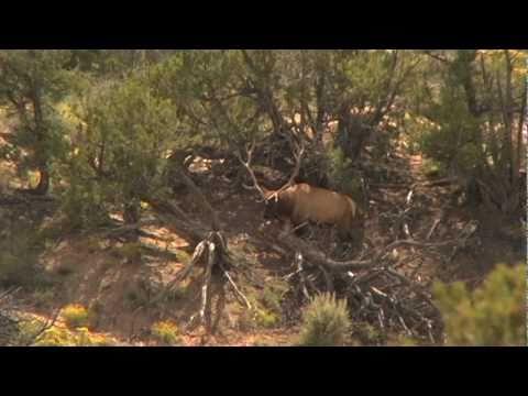 Navajo Nation Elk Hunt with 7 year old MASTER elk caller ...
