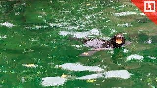 Малыш морской котик родился в Московском зоопарке