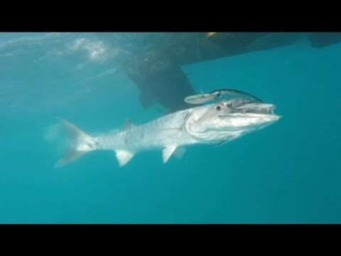 OFFSHORE TROLLING KEY WEST FISHING GREAT BARRACUDAS AND BONITO FULL DAY VIDEO DECEMBER 2017