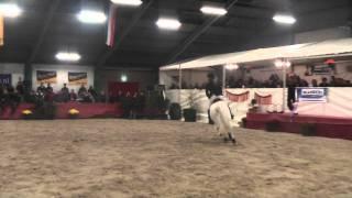 Aniek Diks & Zippi Z - Masters Wanroij 2011 (4e ronde)