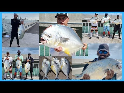 MASSIVE PERMIT From Land, PERMIT FISHING Florida Keys, Bridge Fishing!!!!