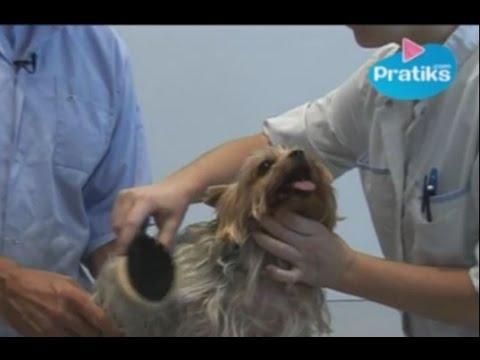 Comment laver son chien doovi - Comment couper les griffes de son chien ...