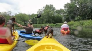 Doberman And Dachshunds Go Kayaking Again