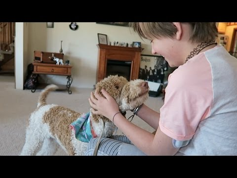 ?A DAY IN THE LIFE OF A DIABETIC SERVICE DOG - LOW BLOOD SUGAR SCENT TRAINING! ?