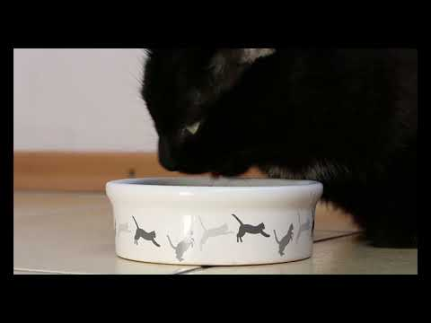 "cute cat video - cute and funny cat videos compilation ""cute moment of the cats"" soo cute! #3"
