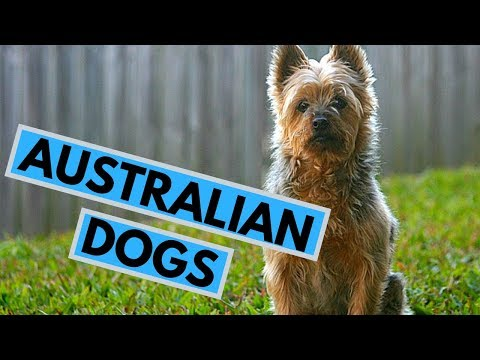 TOP 10 Australian Dog Breeds