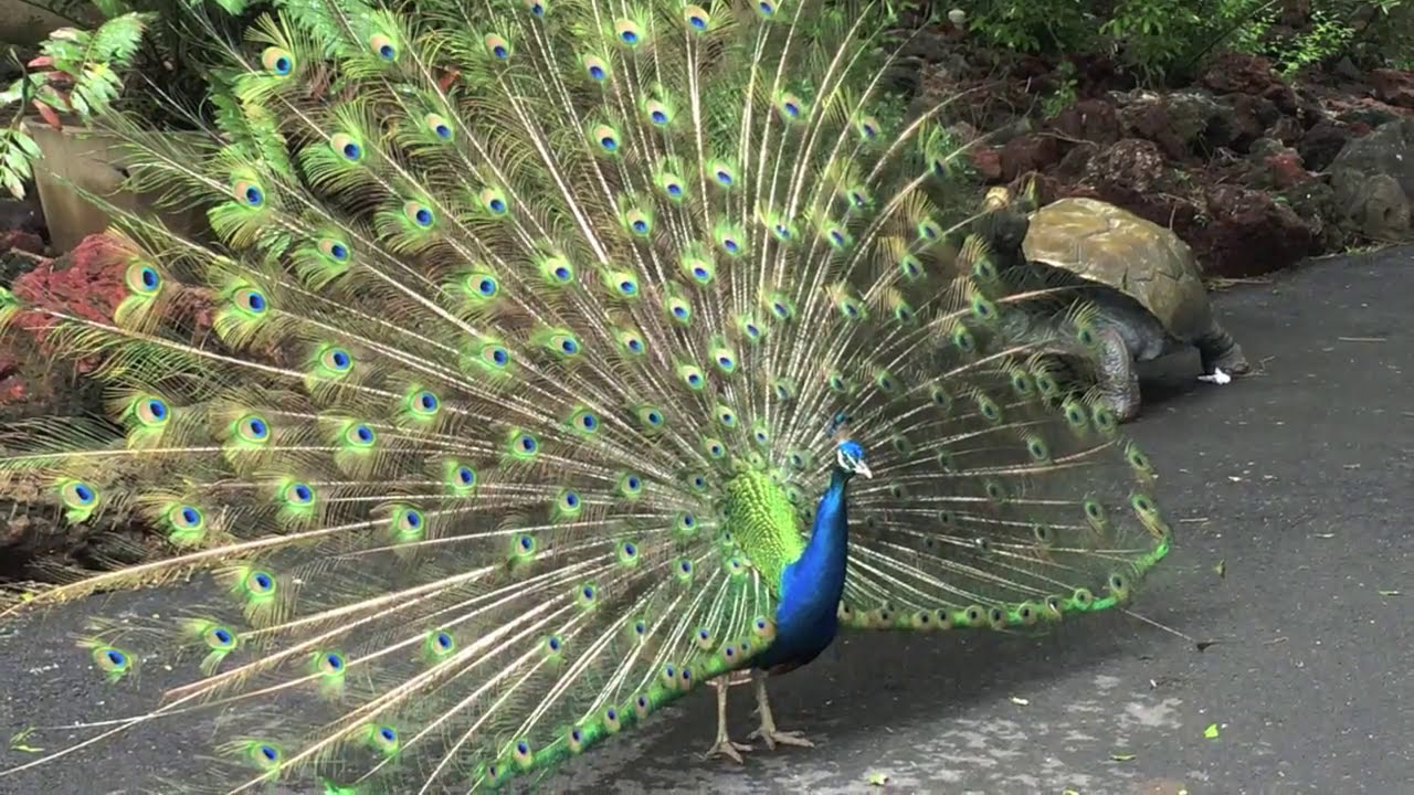 Gladys Porter Zoo Brownsville Tx Youtube