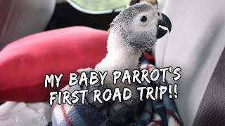 My Baby Parrot's First Road Trip (Pangasinan) | Vlog #226
