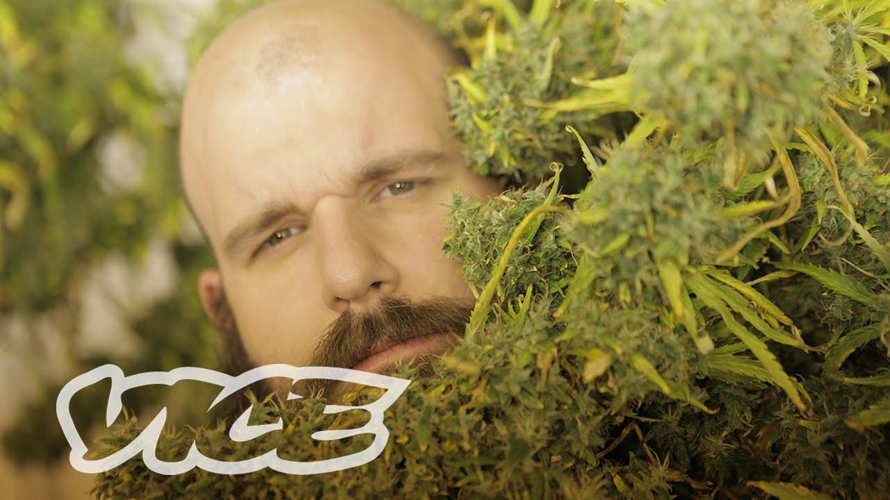 The Dark Grey Market: Canadian Cannabis