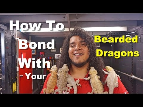 How To Bond With Your Bearded Dragon Tips !! Part 1