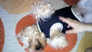 Рассказ о моей собаке