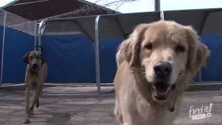 Pooches Paradise | Dog Daycare & Pet Spa In Kansas City | Finditkc
