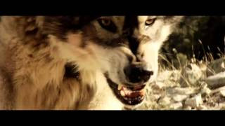 Wolf Town   Official Trailer