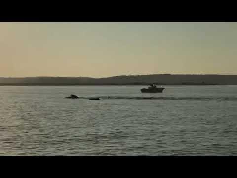 Dolphins Huntington Harbor