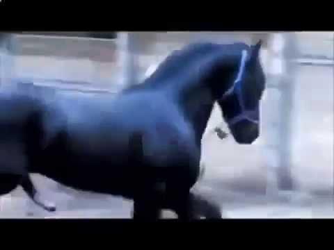 Спаривание лошадей Животный мир Жесть