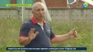 Бывший тяжелоатлет из Армении разводит в Подмосковье буйволов