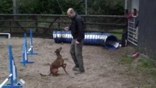 Dog Agility - Jaws Agility - Beginners From The Start