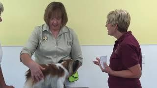 My Dog and Me 'Papillon, Shetland Sheepdog, Collie'