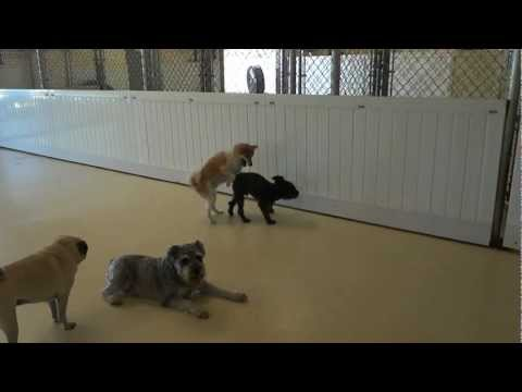 Alvin, Willis, Parker, Zafu, Joe, Lulu, Fletch   it looks like wrestle mania!