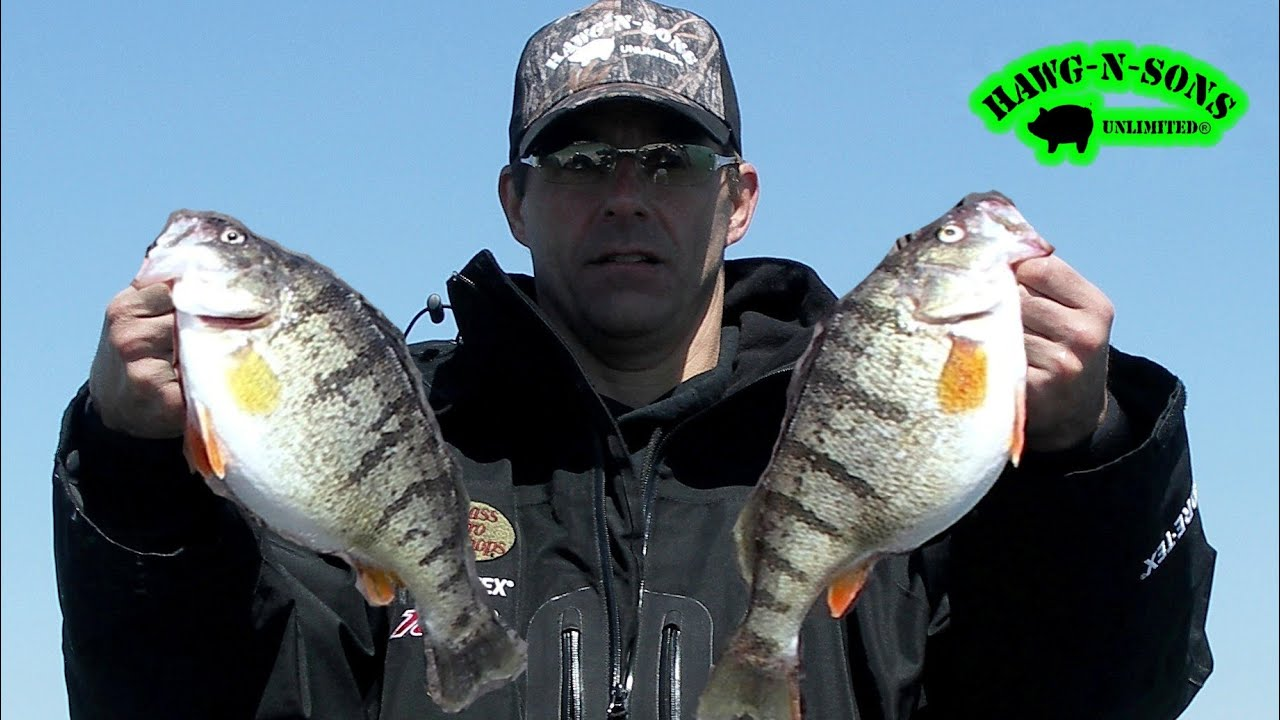 Catch jumbo perch fishing ultimate secret exposed for Michigan dnr fishing report