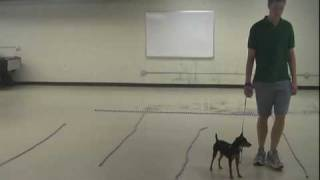 Ttouch In The Canine Classroom: Balanced Movement Atticus