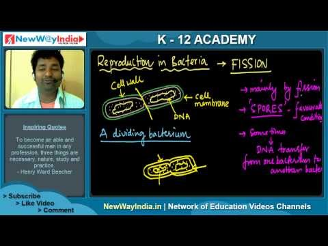 CBSE Class 11 Biology -  Types of Bacteria | Biological Classification (#003)