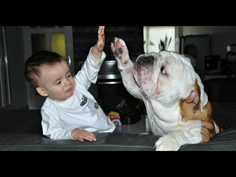 Top 10 Best Dog Breeds for Kids and Families