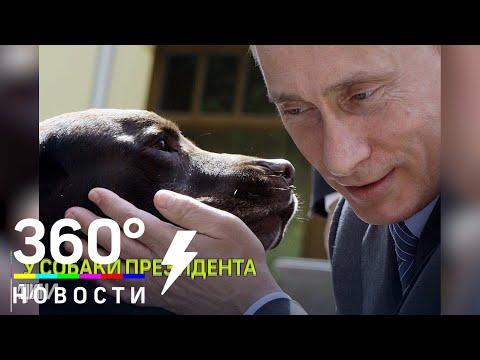 Собаки Путина: Кони, Баффи, Юмэ, Верный, Паша