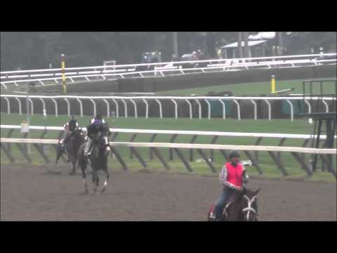 Court Savvy and River Dell Breeze at Saratoga July 27th, 2015