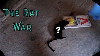 Checking The Rat Traps  (The Trapping Shed Saga) Success!