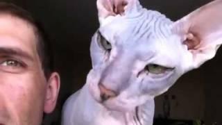 Человек и кошка смотрят из окошка