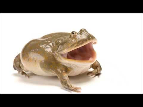 venture into the frog