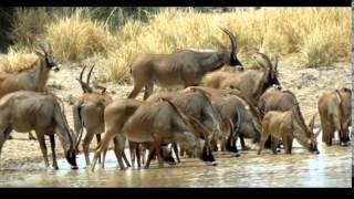 Benin's Pendjari National Park 2012 - 1 of 4