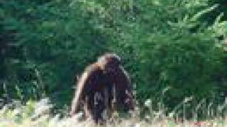 even more sasquatch pictures with sound