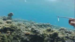 Spearfishing Çupra / Orata Umut Bayır (Ören)