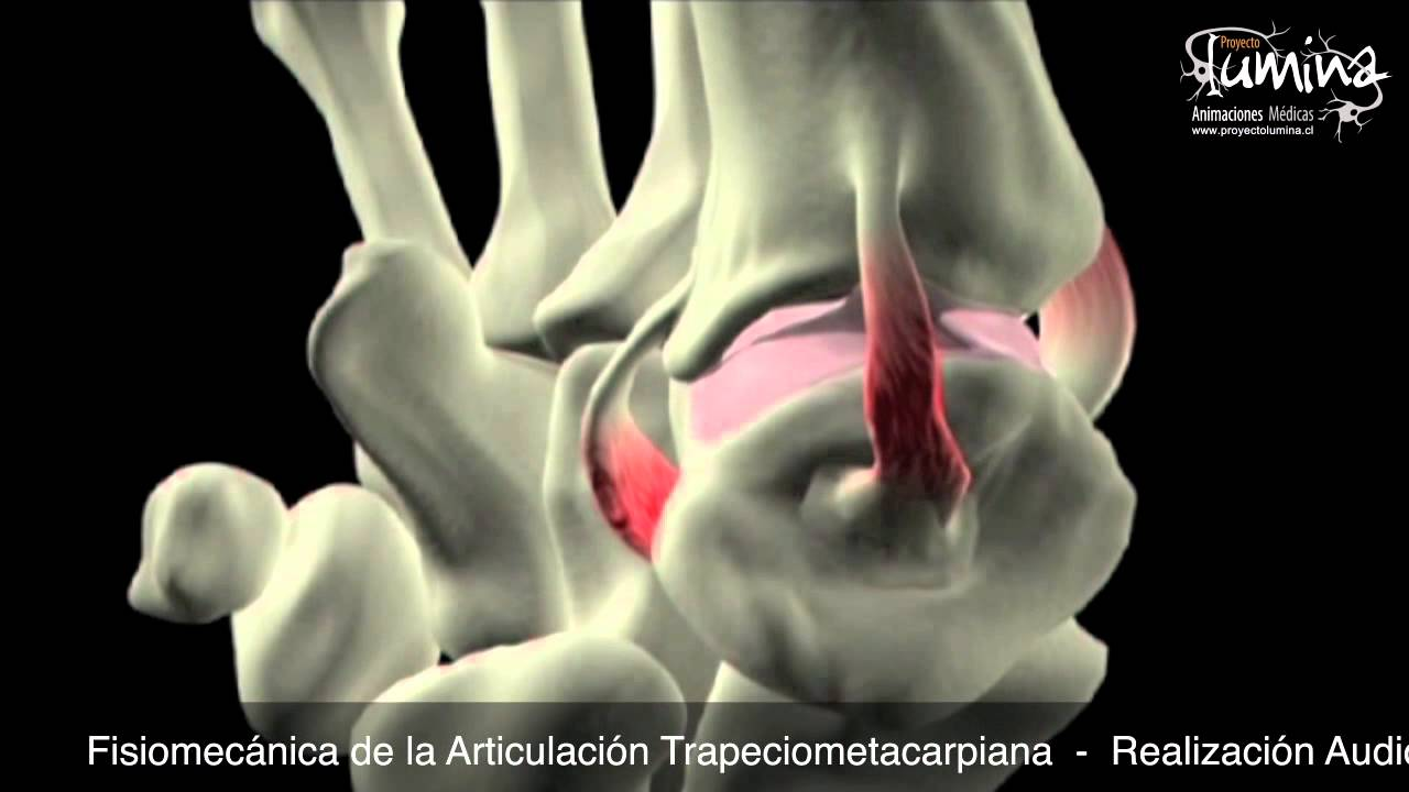 Fisiomecánica de la Articulación Trapeciometacarpiana - YouTube