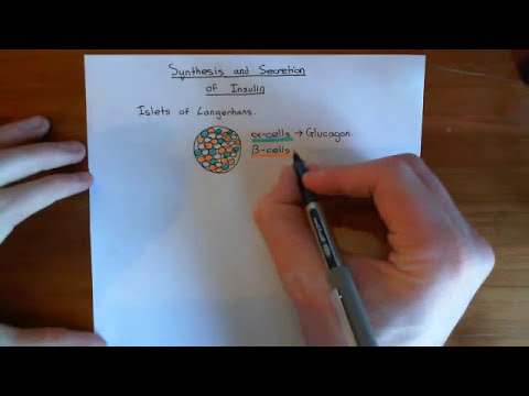 Insulin Synthesis and Secretion Part 1