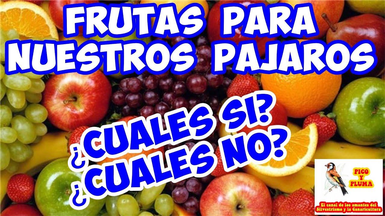 Alimentacion Frutas Para Nuestros Pajaros Cuales Si Y Cuales No Parte 1 Youtube