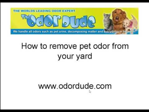 How To Get Dog Urine Odor Out Of Yard | Free Tips From Odor Dude