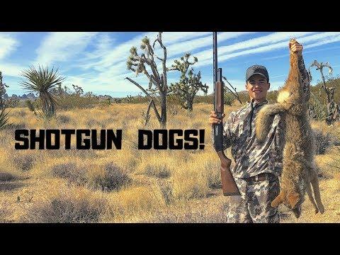 Coyote Hunting with a SHOTGUN - Tips & Tricks - New Predator Box