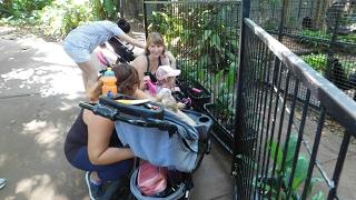 Vlog: Morning Walk At The Zoo