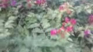 Tipura king Molsom video