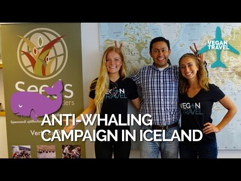 Vegan Travel visit to Anti-Whaling Campaign in Iceland
