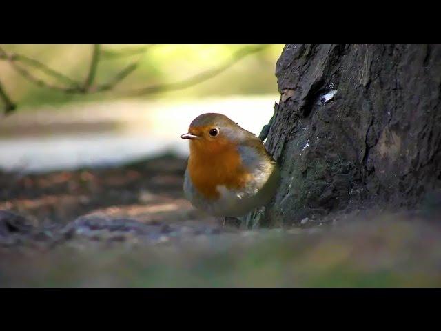 Dé tijd voor nestkastjes en vogelhuisjes