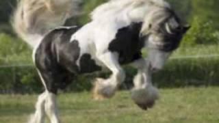 Horses Slideshow - Victor e Leo \o/