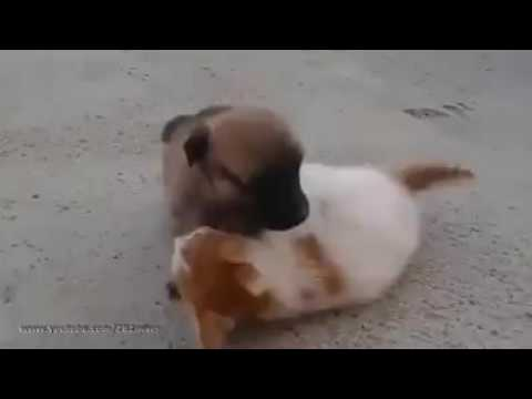 Never seen before cat and Dog fight. you will be amazed.