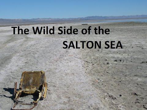 The Wild Side of the Salton Sea