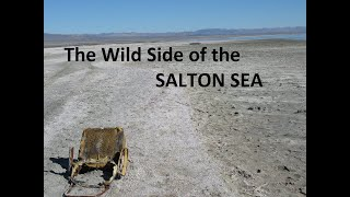 The Wild Side of the Salton Sea