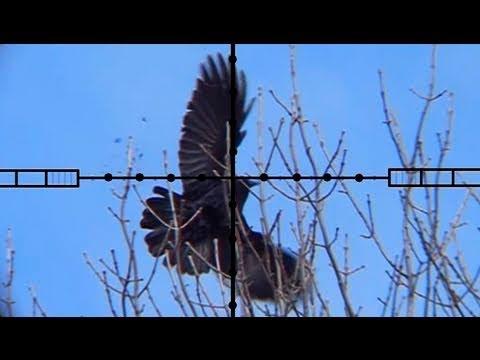 Crow Hunting - Ricochet Investigation