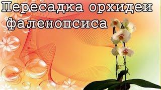 Пересадка орхидеи фаленопсиса! Transplanting Phalaenopsis orchids!(В этом видео вы увидите удаление субстрата и нижних листьев Фаленопсиса и пересадку в новый субстрат. Субст..., 2016-05-02T09:25:02.000Z)